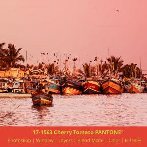 PANTONE color 17-1563 Cherry Tomato applied to image from Mirissa harbour Sri Lanka