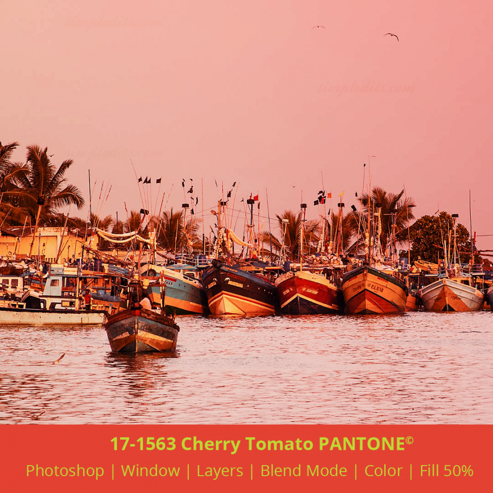 PANTONE color 17-1563 Cherry Tomato applied to image from Mirissa harbour Sri Lanka