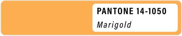 2021 color palette PANTONE 14-1050 Marigold pastels color Spring swatch color